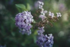 весна сада цветков Стоковые Фото