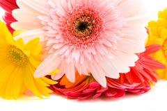 весна светлого тонового изображения Стоковые Изображения RF