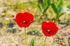 Весна, сезон лета стоковые изображения rf