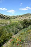 весна сельской местности andalusia Стоковые Фото