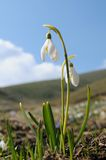 весна снежка падений Стоковые Фото