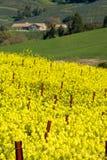 весна страны Стоковое фото RF