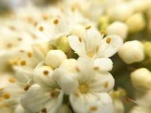 Весна съемки макроса цветка стоковые фотографии rf