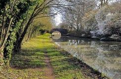 Весна с цветением одичалой сливы на грандиозном канале соединения на крышке Yelvertoft, Northamptonshire Стоковое Изображение RF