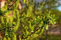 Весна там стоковая фотография rf