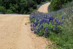 Весна Техаса Стоковые Изображения