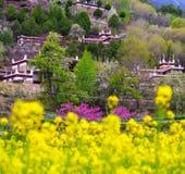 Весна тибетской деревни в Danba Стоковые Фото