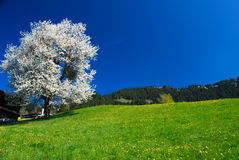весна Тироль Стоковая Фотография RF