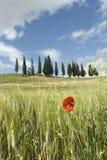 весна Тоскана Стоковое Изображение