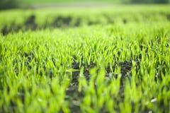 весна травы поля стоковая фотография
