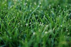 весна травы росы Стоковые Фотографии RF