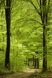 весна тропы пущи Стоковые Изображения
