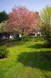 весна тропы Стоковые Изображения RF