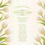 Весна тюльпана цветет букет для вашего дизайна карточки. Стоковые Фото