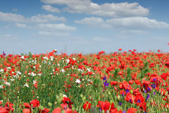 Весна луга полевых цветков стоковая фотография rf