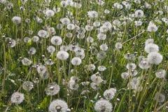 Весна луга i последняя Стоковое Фото