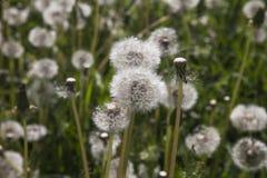 Весна луга i последняя Стоковые Фотографии RF