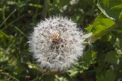Весна луга i последняя Стоковые Фото