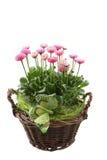 весна украшения Стоковое Изображение