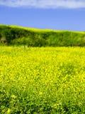 весна утех Стоковая Фотография