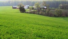 весна утра фермы стоковое изображение rf