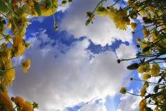весна утра Стоковое фото RF