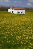весна фермы одуванчиков Стоковые Изображения RF