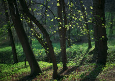 весна фонарика Стоковая Фотография