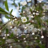 весна фото сада цветения яблока Стоковое Изображение