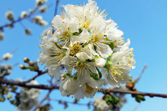 весна фото сада цветения яблока Стоковое фото RF