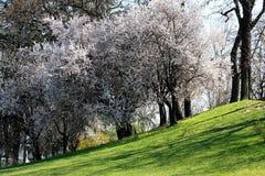 весна холма Стоковое фото RF