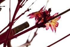 весна цветений Стоковое Изображение RF