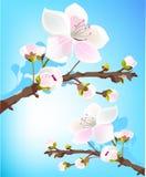 весна цветения свежая бесплатная иллюстрация