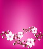 весна цветения свежая Стоковые Фотографии RF