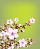весна цветения свежая иллюстрация штока