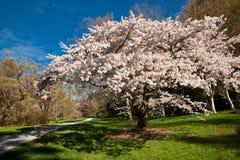 весна цветения Стоковое Изображение RF