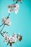 весна цветения Стоковые Изображения RF
