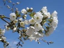 весна цветения стоковые фото