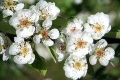 весна цветения Стоковое фото RF