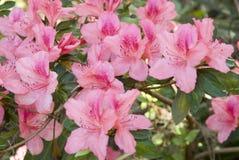 весна цветенй Стоковые Изображения RF