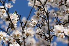 весна цветеня Стоковое Фото