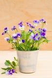 Весна цветет в винтажной вазе на деревянной предпосылке, деревенском стиле Стоковое Изображение