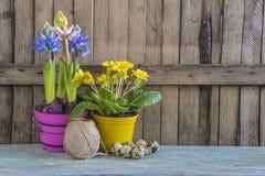 Весна цветет в пестротканых баках, яичках триперсток в гнезде Стоковые Изображения