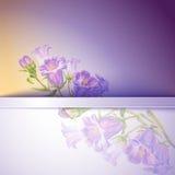 Весна цветет карточка шаблона приглашения Стоковое Изображение