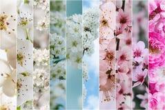 Весна цветет коллаж Стоковое фото RF