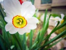 Весна цветет предпосылка крупного плана Стоковая Фотография RF
