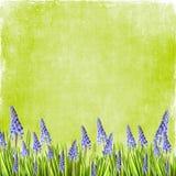 Весна цветет предпосылка Стоковая Фотография RF