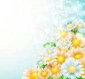 Весна цветет предпосылка Стоковое Фото