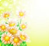 Весна цветет предпосылка Стоковые Фото