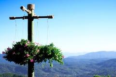 весна цветет смертная казнь через повешение в корзине стоковое изображение